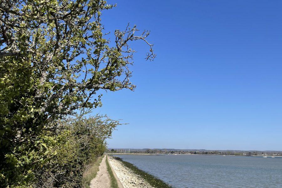 Thorney Island 4